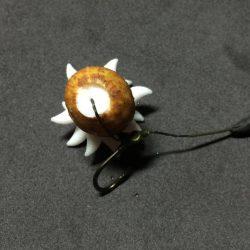 White Maggot Plug rig example on hook  Evolution Carp Tackle