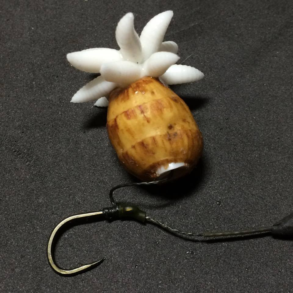 White Maggot Plug rig example| Evolution Carp Tackle